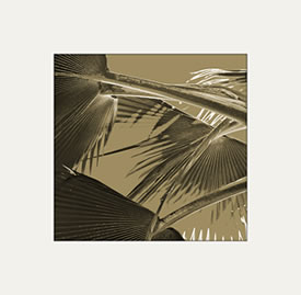 Sepia Toned Fronds